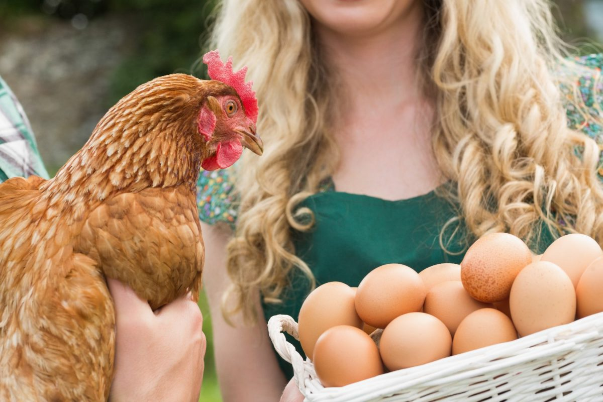 protein poultry egg industry